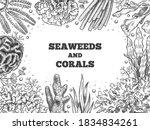 Seaweed Background. Reef...