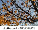Autumn Leaves On A Branch....