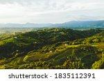 Italian Vineyard Hills...