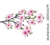 cherry blossom pink   violet ... | Shutterstock . vector #183516179