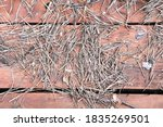 Dried Pine Needles On Rustic...