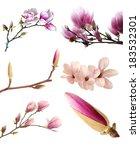Pink Magnolia Flower Bulb...