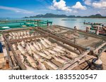 Small photo of Sea fish that the fishermen have dried in the sun. To sell to tourists At Ban Ko Rat (rad island) community,Surat thani,Thailand