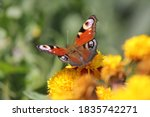 Butterfly On A Flower  Blooming ...