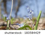 photo of the first spring... | Shutterstock . vector #183584429