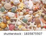 Seashells  Corals And...