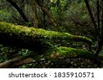 Moss Covered Tree Trunk In An...