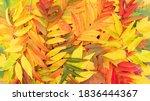 Bright Fallen Leaves Autumn...