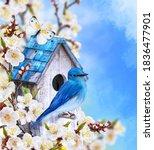 Blue Bird Titmouse Sitting On A ...