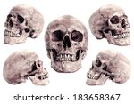Skull model set  on isolated...