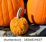 A Small Warty Pumpkin And Two...
