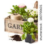 Beautiful spring flowers and gardening tools on a white background. - stock photo