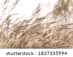 Beautiful Abstract Closeup Of...