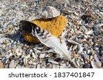 Sea Shell Sand Stone And Bird...