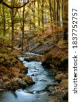 Deep Forest Autumn Creek...