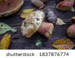 Fresh Mushrooms On Wooden Board