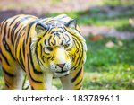 tiger statue in the garden | Shutterstock . vector #183789611