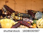 Small photo of colorful corn on the cob and multiform pumpkins