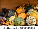 Small photo of multiform pumpkins and colorful corn on the cob