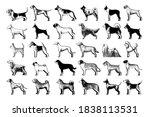set of dogs breeds   vector... | Shutterstock .eps vector #1838113531