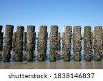 Wooden Posts Of A Beach Erosio...