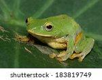 treefrog | Shutterstock . vector #183819749