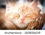 Stock photo closeup of sleeping ginger kitten with focus only on the nose 183836639