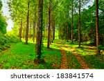 Dirt Road In Deciduous Forest...