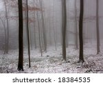Fog and snow in a forest - stock photo