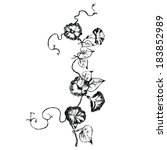 loach flowers sketch. this is... | Shutterstock .eps vector #183852989