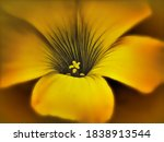 Close Up Painterly Yellow Flower