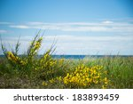 bush of yellow spring flowers... | Shutterstock . vector #183893459