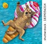 A Beige Dog Is Lying On An...