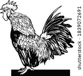 Hand Drawn Rooster Vector...