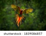 Parrot Flying In Dark Green...