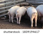 The Three Little Pigs With...