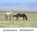 Wild Horses Roaming The Adobe...