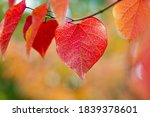 Colorful Leaf In The Shape Of A ...
