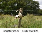 Sheep\'s Skull Hanging On A...