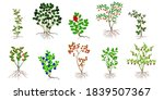 set of bushes with berries on a ...   Shutterstock .eps vector #1839507367