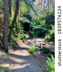 Hiker Visits Glow Worm Cave...