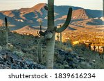 A Many Armed Saguaro Cactus At...
