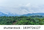 Landscape Of Green Forest And...