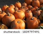 Colorful Ornamental Pumpkins ...
