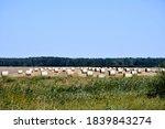 View Of A Vast Field  Meadow ...