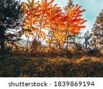 Autumn Village Landscape. Loe...