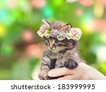 Stock photo portrait of cute kitten crowned with a chaplet of clover 183999995