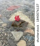 Single Red Maple Leaf Lying On...