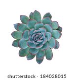 Succulent Plant Isolated On A...