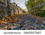 Autumn Leaves along wooded path in Lowell Park, Everett WA